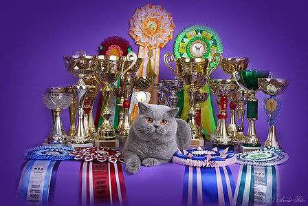 Salvador Lesne Ranczo british shorthair