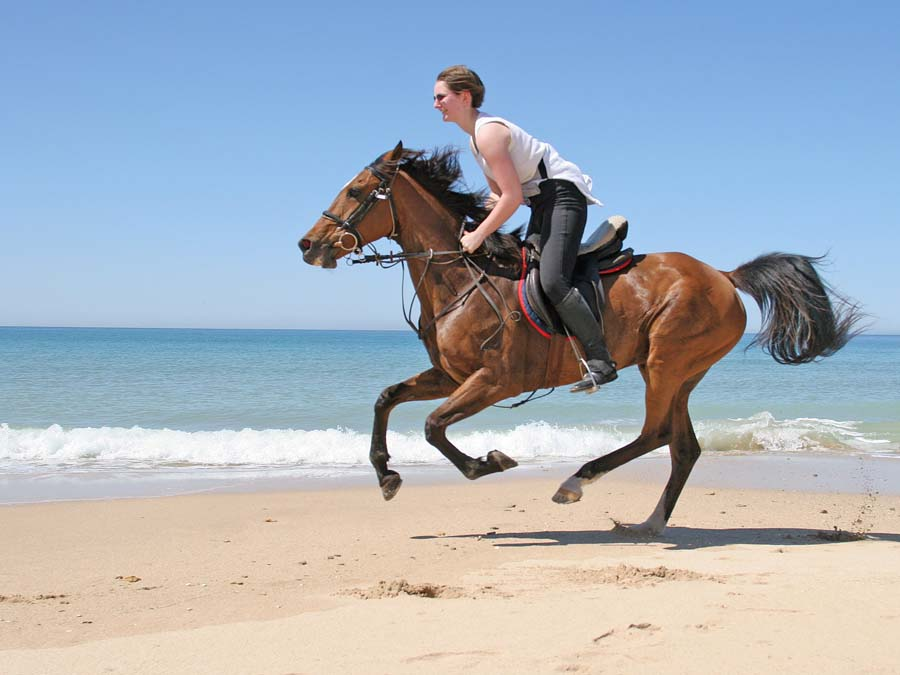 horse riding in abu dhabi