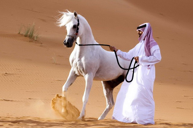 Arabian Horse rescue in Abu Dhabi