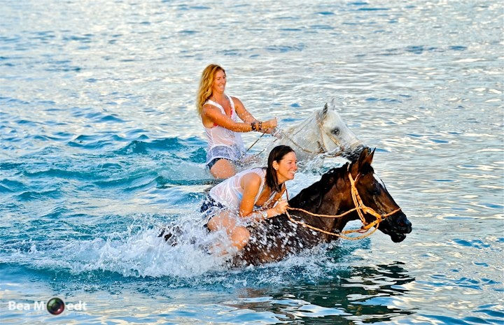 Beach Ride & Swimming with Horses