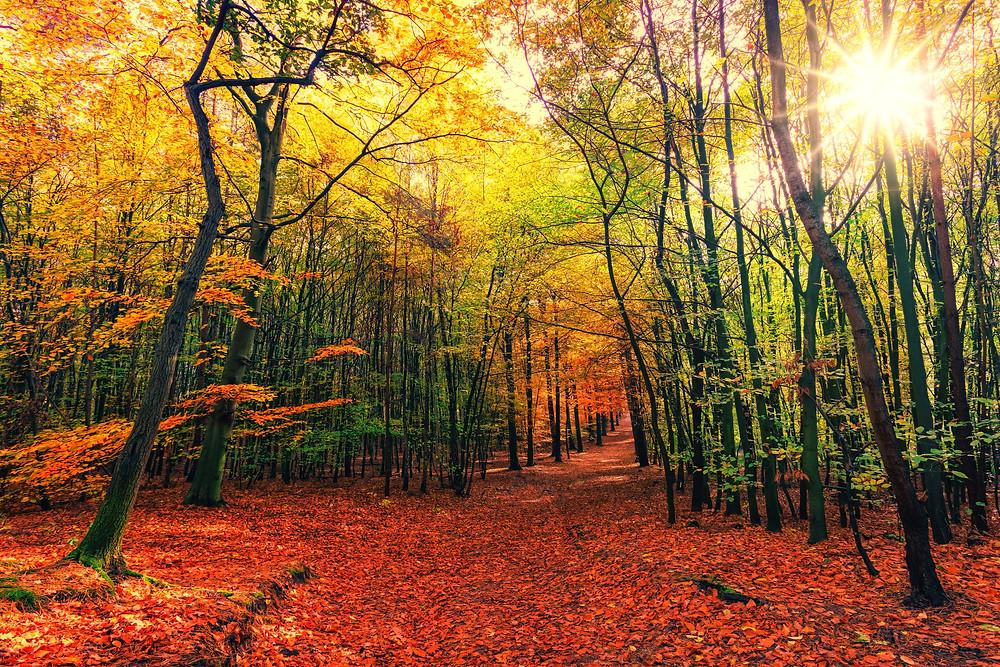 Wunderschöner Weg durch den herbstlichen Wald