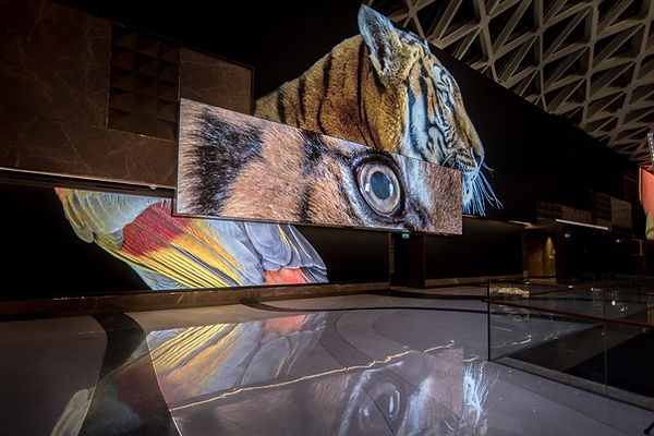 MGM Spectacle LED wall