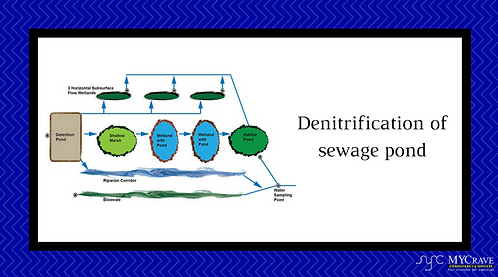 Denitrification Of Sewage Pond