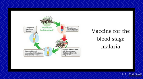 Vaccine For The Blood Stage Malaria