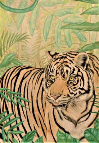 Tiger i junglen 2018