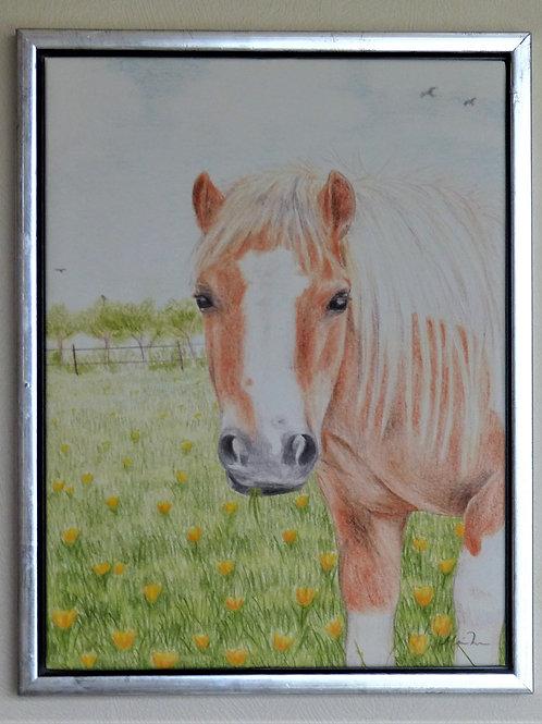 Min gamle pony Perle