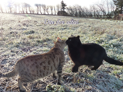 To katte på mark kort
