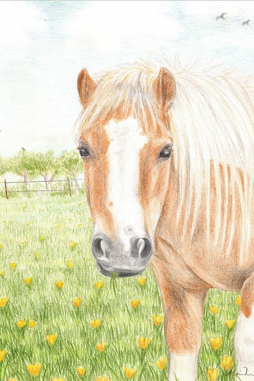 Min gamle pony Perle original tegning