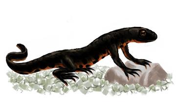 Giff_salamander.png