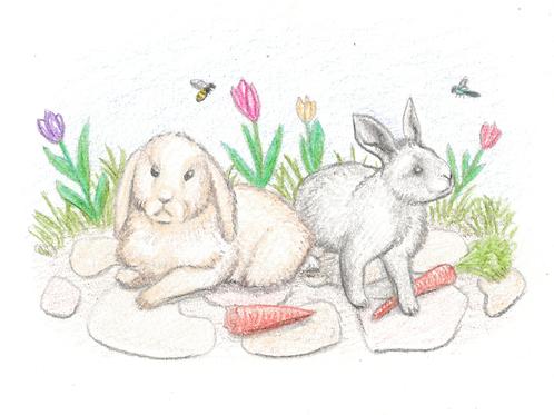 Kaniner kort