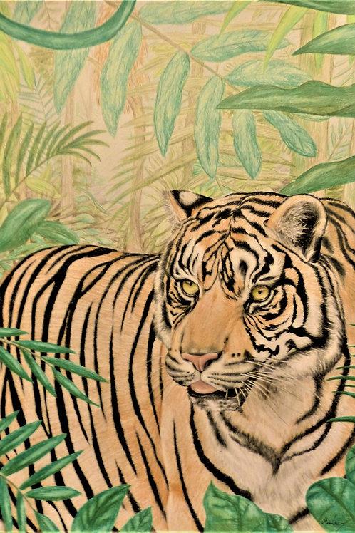 Tiger i junglen