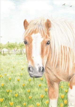Ponyen Perle 2 mindre.png