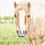 Thumbnail: Min gamle pony Perle
