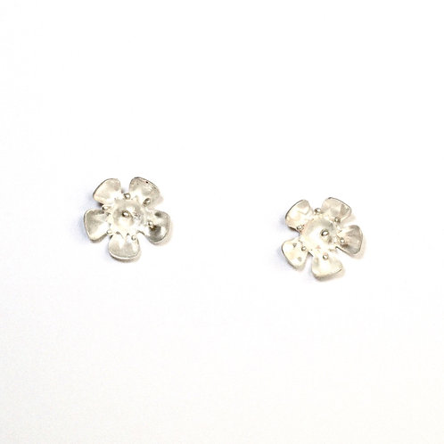 Geraldton Wax studs (Large)
