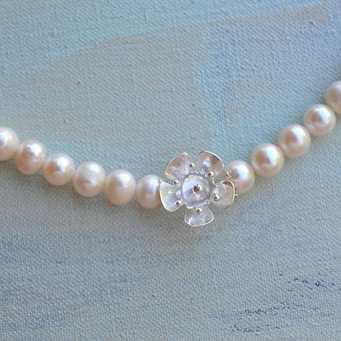 Geraldton Wax on Pearls
