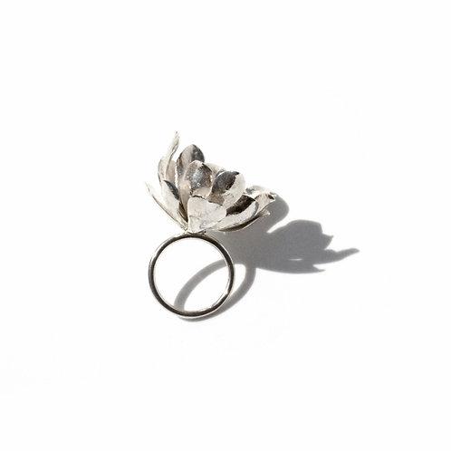 Large Aeonium Ring