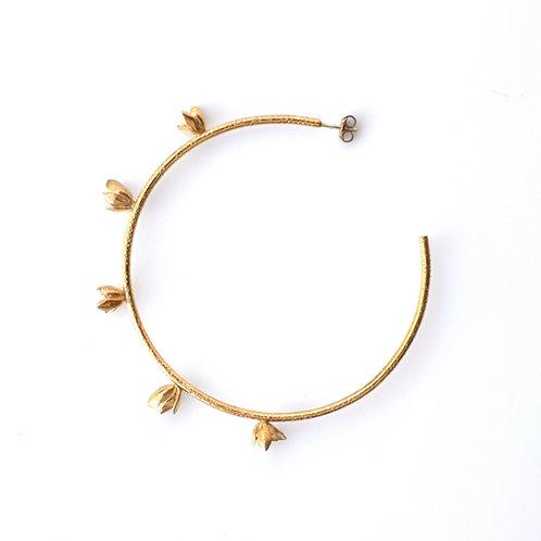 Golden Aeonium Hoops