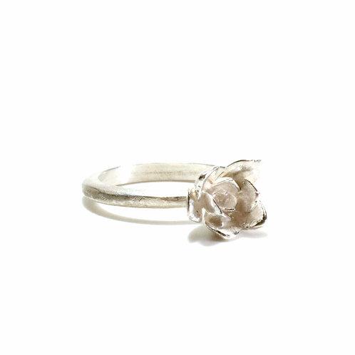 Aeonium Ring