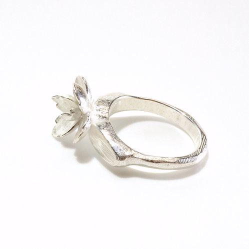 Kalanchoe Irregular Ring