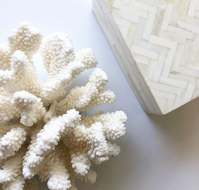 Sustainably sourced coral and decorative