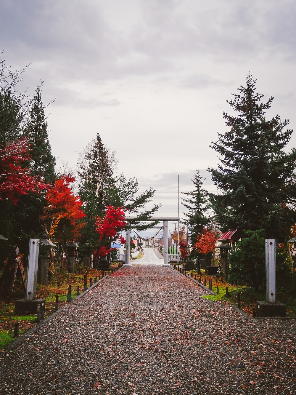 4 late fall.jpg