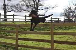 Pip jumping