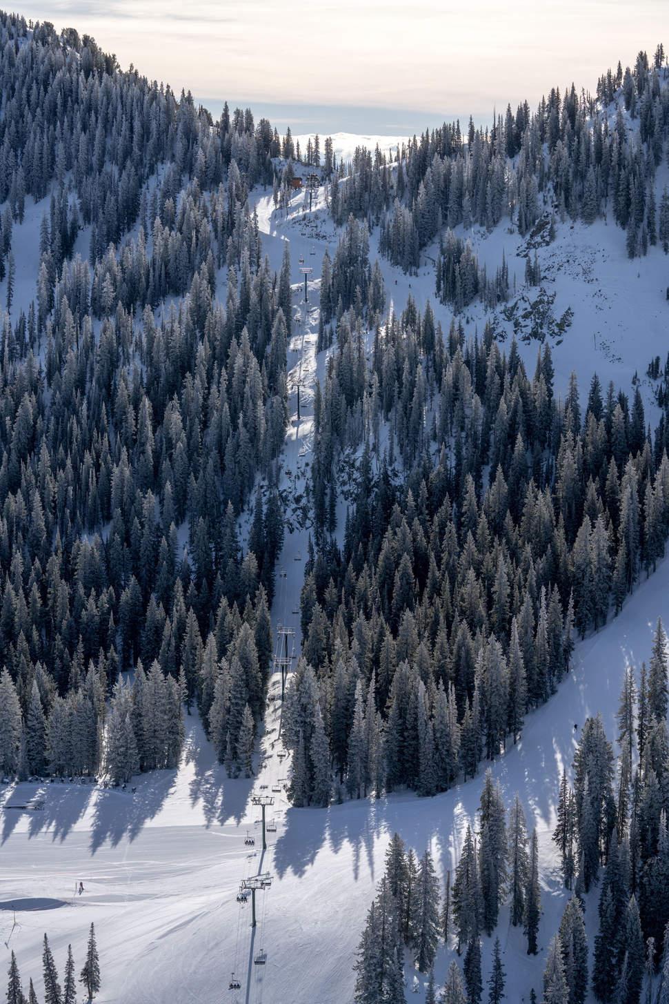 'Tall Pines', Alta