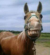 Tater smiling