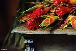 Fleurs coloniales