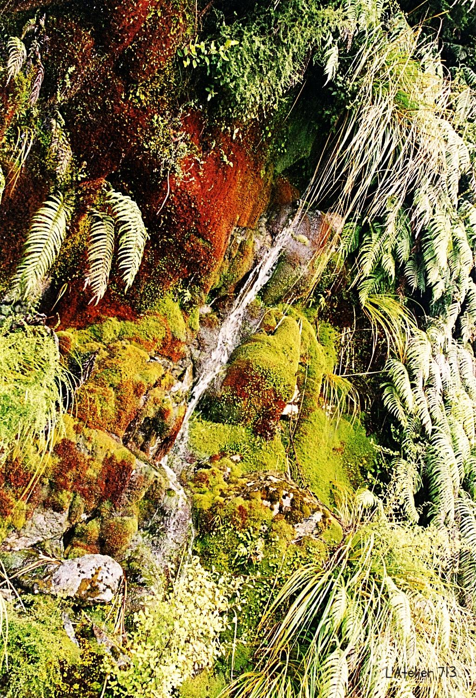 Forêt primitive