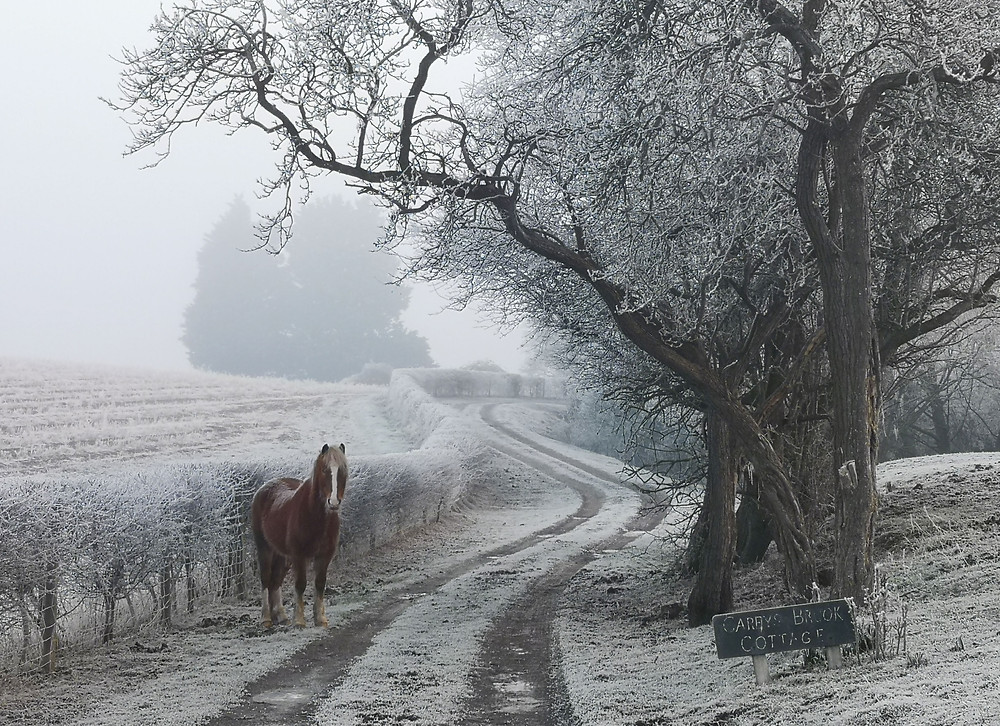 A track going through a frosty field with a horse looking on