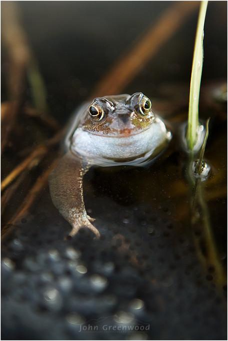 Frog-Spawn