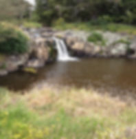 waterfall as an obstruction to eel passage