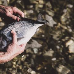 Fischentschuppen Kathrin Gindl_.jpg