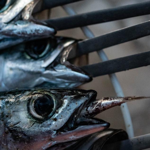 Fischinfisch Kathrin Gindl_.jpg