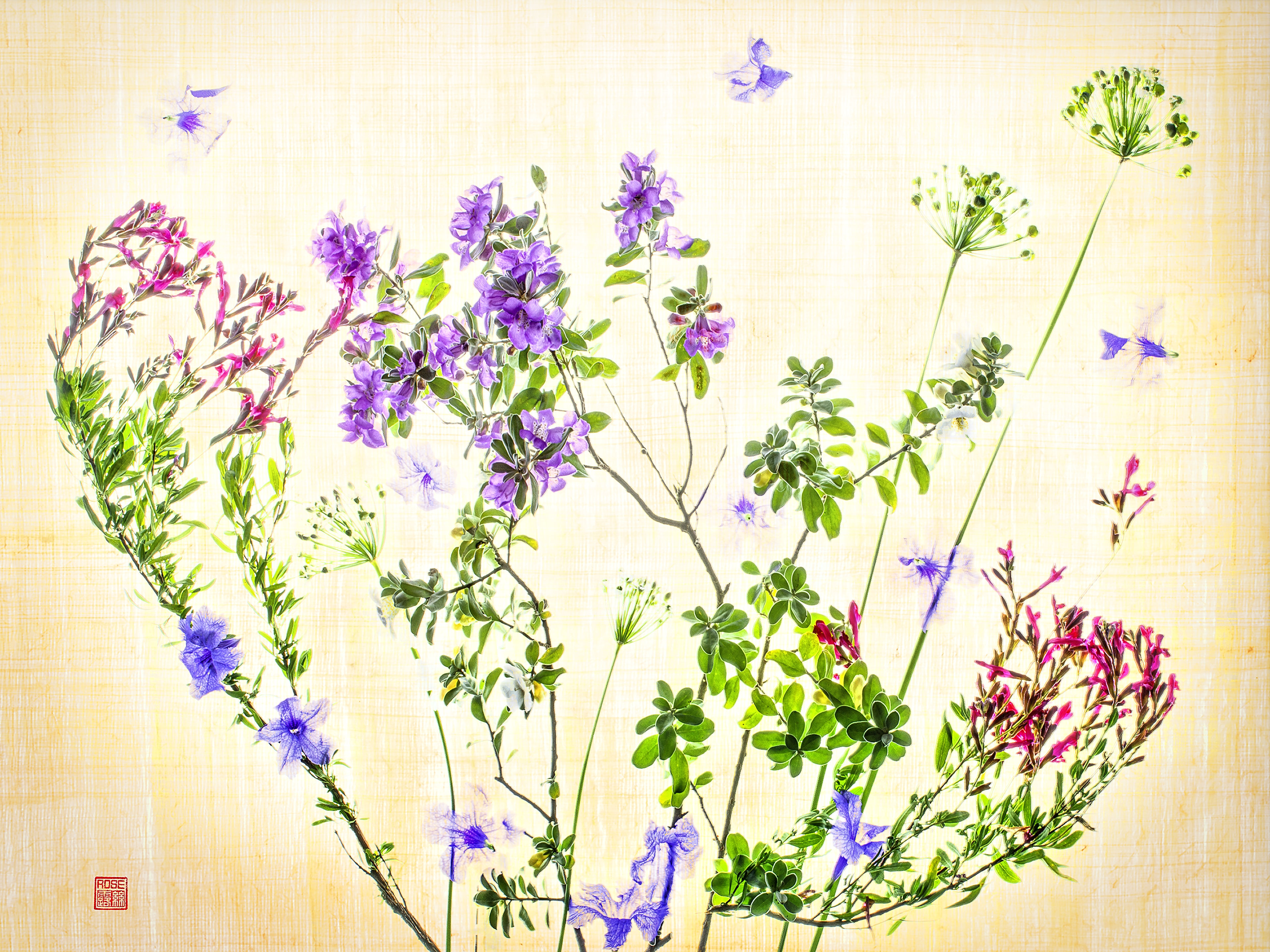 Yard Flowers Wimberley