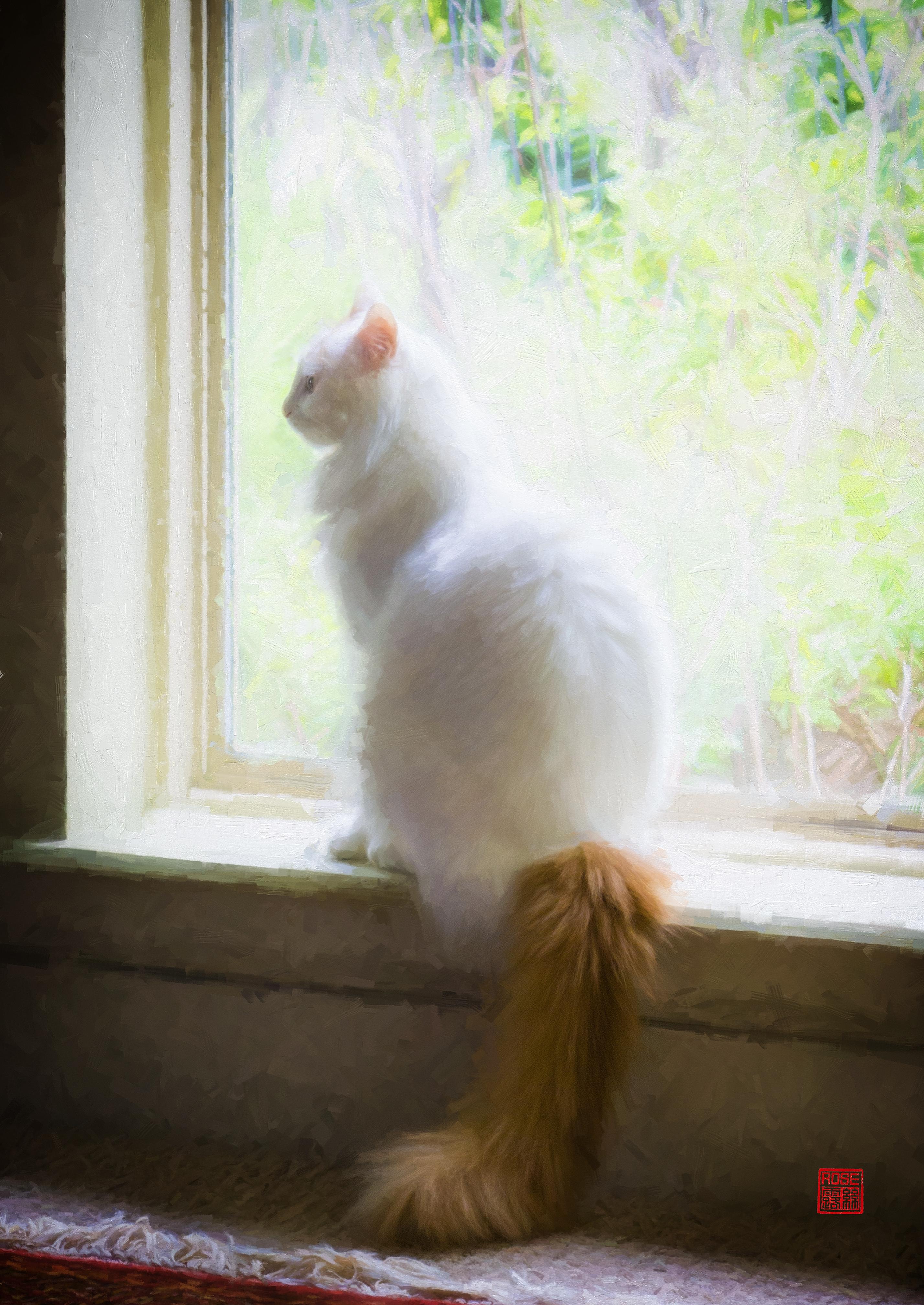 Birdwatching Break