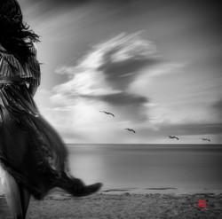 Wind, Water and Wonder