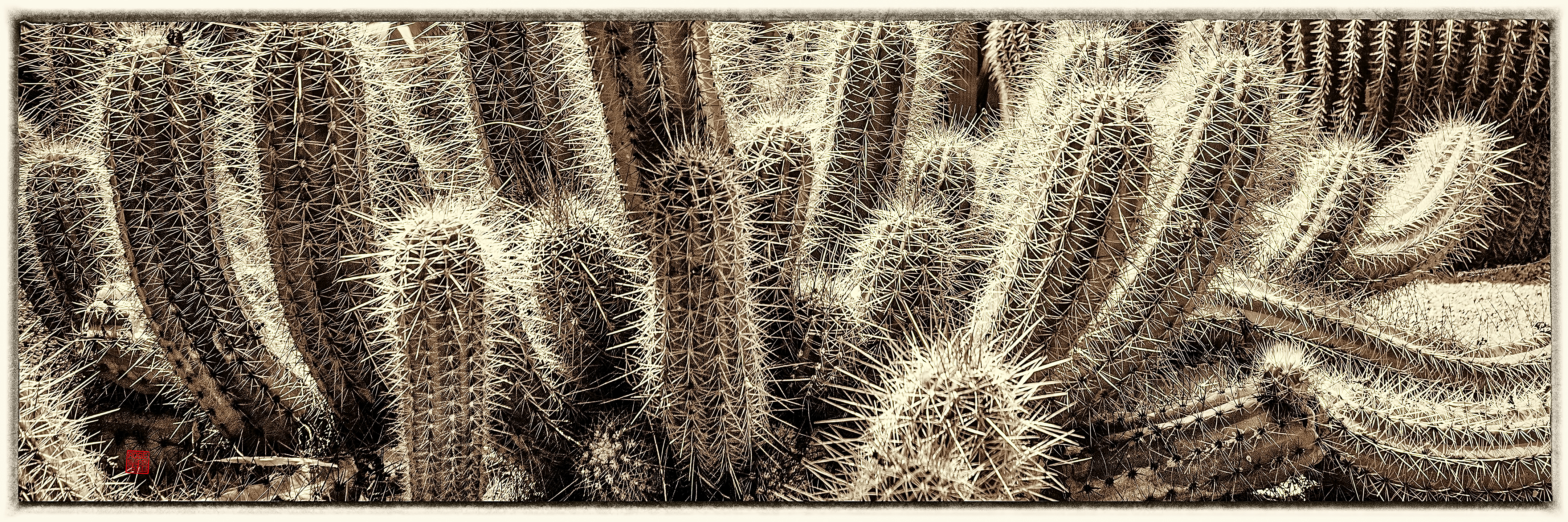 Texas Spiny Lizard Amid Cacti