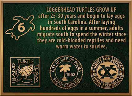 Loggerhead Turtle Information & Logo Plaque