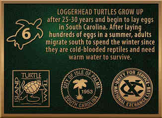 Loggerhead Turtle Information & Logo Plaque