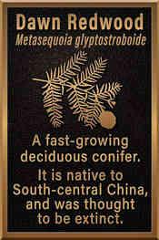 Tree Identification Information Plaque