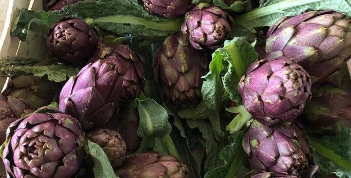 Artichauts violets de Provence - botte