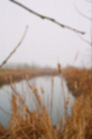 film photography, Justin Harris Photography, canon ae1, Kodak portra 400, film, landscape