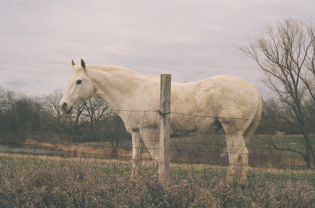 film photography, Justin Harris Photography, horse, film, canon ae1, Kodak Portra 400