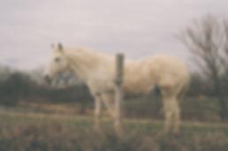 film photography, Justin Harris Photography, horse, film, canon ae1, Kodak Portra 400