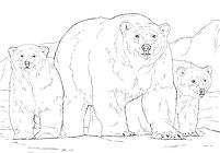 polar-bear-with-two-cubs-coloring-page_F