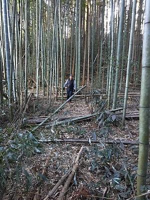 BambooForest.jpg
