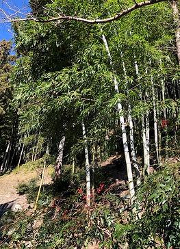 BambooForest-10.jpg