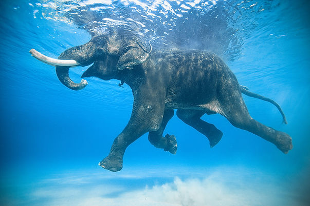 rajan elephant.jpg
